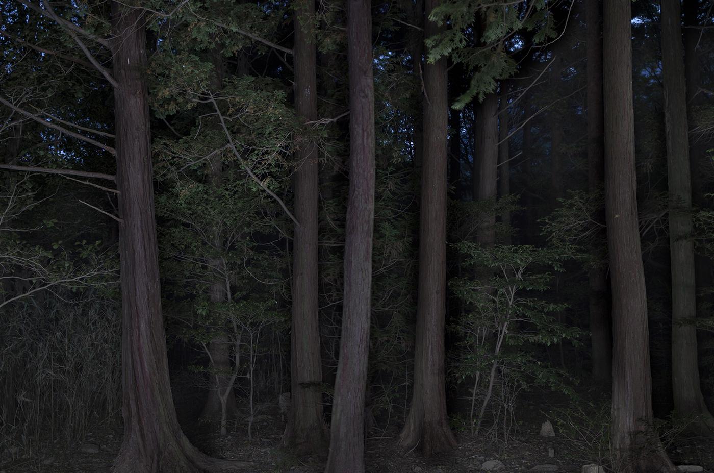 Taejoong Kim,Foresta #7,2013